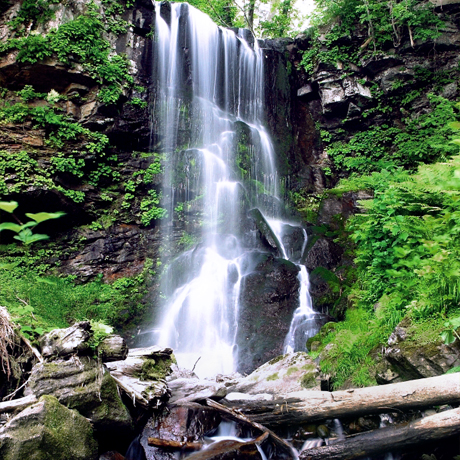 写真:深緑の滝
